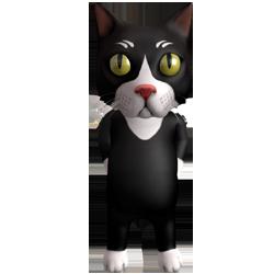 boy cat small