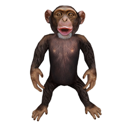 chimp sm